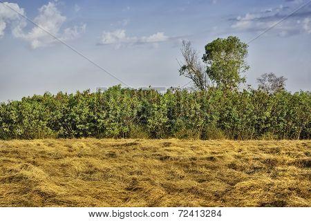 Grass, Trees, Sky