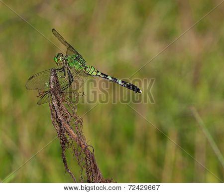 Insect Predator