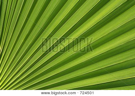 Palmetto Abstract