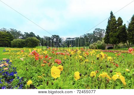 Conservatory Of Flowers, San Francisco