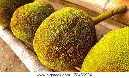 Tarap Fruit