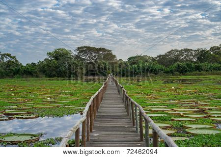 Brazilian Panantal skyline and wooden footbridge