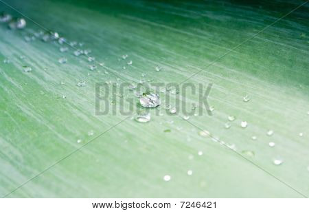Water Droplets On Green Agave Leaf