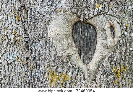 The Natural Image Of Heart On Tree Bark