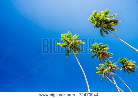 Palm trees on clear blue summer sky wallpaper and background