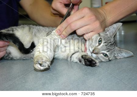 kitten cast removal