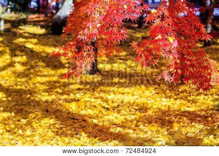Autumn Colors In Eikando Temple, Kyoto, Kansai, Japan