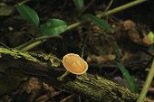 foto of spores  - close up for Brown mushroom on the timber  - JPG