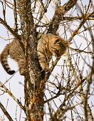 picture of climbing roses  - Cat has climbed the tree as she - JPG
