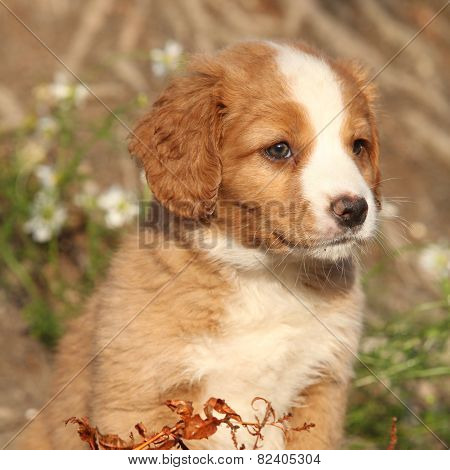 Portrait Of Gorgeous Puppy In Nature