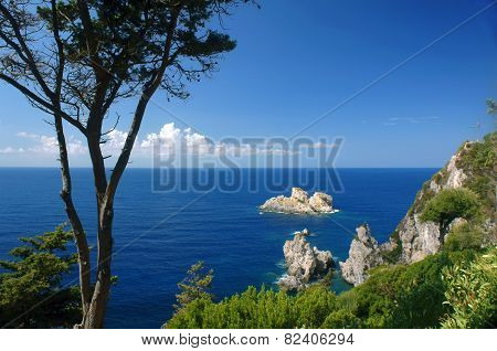 tree and cliff on coast at Corfu island