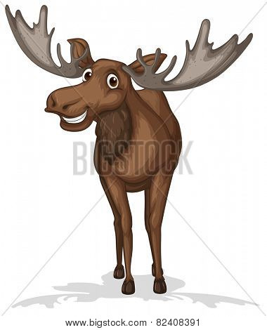 Illustration of a close up moose