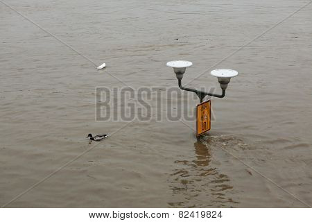 PRAGUE, CZECH REPUBLIC - JUNE 3, 2013: Duck passes the street lamppost partially flooded by the swollen Vltava River in Prague, Czech Republic.