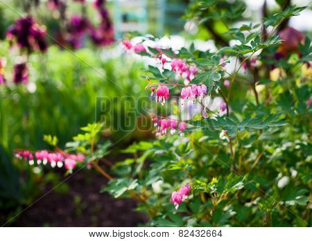 Pink Flowers in a Country Garden