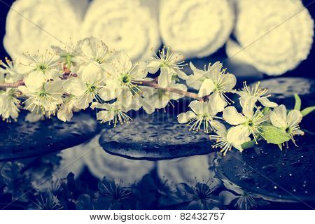 Toned Spa Background Of Zen Stones, Blooming Twig Plum With Reflection On Water,  Instagram Effect,