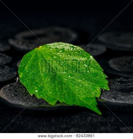 Green Leaf Hibiscus On Zen Basalt Stones With Drops In Water, Beautiful Spa Background, Closeup