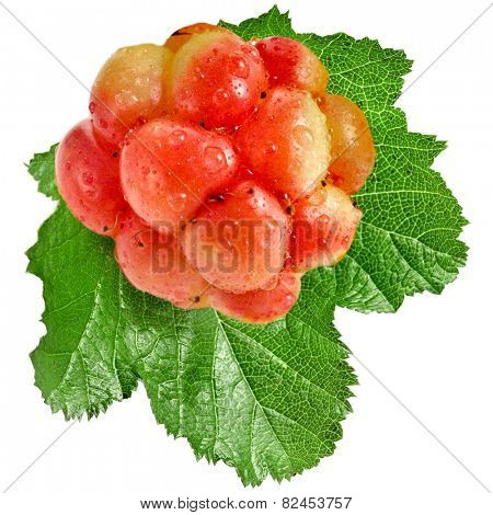 cloudberry close up macro shot isolated on white
