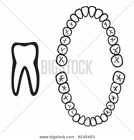 isolated tooth vector illustration