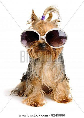 Funny Hund