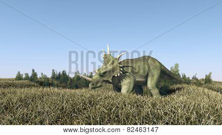 Styracosaurus grazing