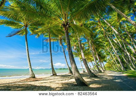 Palm trees on the beach of Palm Cove in Australia