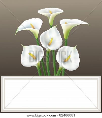 Calla lily - greeting card.