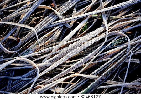 Frozen grass in steppe - abstract background