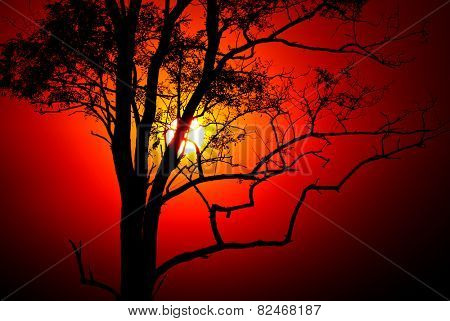 Evening scene with sunset sun and tree