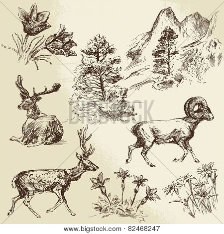 wild nature, forest and mountains - hand drawn illustration