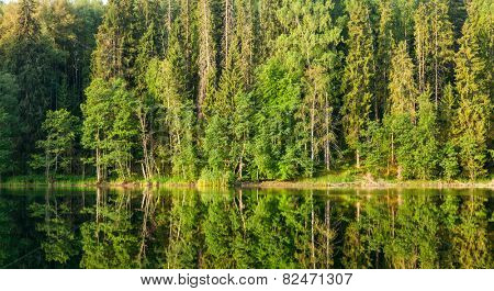 Summer forest reflecting in a lake