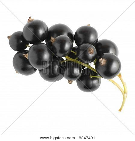 Black Currant | Isolated