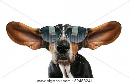 a basset hound with his ears flying away with sunglasses on