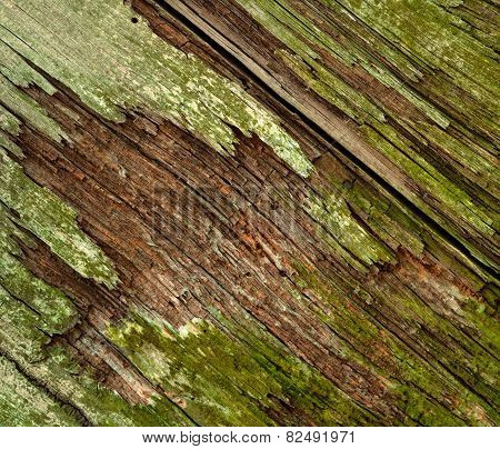 Moldy Old Wood