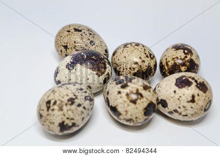 7 Quail Eggs
