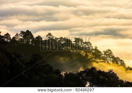 Morning Mist On Doi Angkhang Mountain, Chiang Mai, Thailand.