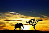 pic of rest-in-peace  - a lone elephant africa - JPG
