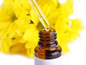 stock photo of perfume  - Dropper bottle of perfume with yellow chamomile on white background - JPG