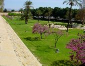 picture of larnaca  - a view of a garden in the center of larnaca - JPG