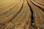 picture of cultivation  - Cultivated field on a farm, textured background
