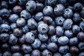 stock photo of food crops  - Close up of fresh blueberries as background - JPG