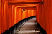 image of inari  - Red Tori Gate at Fushimi Inari Shrine in Kyoto - JPG
