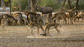 stock photo of bambi  - 2 deer  - JPG