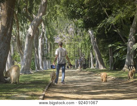 Beverly Hills, CA, USA  June,2nd, 2015 Beautiful tree lined Beverly Gardens Park is a popular spot for dog walkers of the rich and famous.