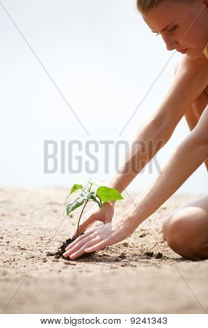 Cultivating Plant