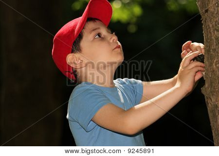 Little Boy Looking At Tree
