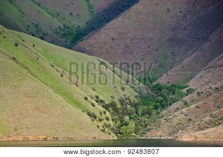 Forest Of Trees Nestled In The Slopes Of Hells Canyon