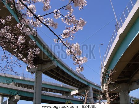 poster of Blossom Cherry Branch In City