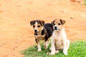 picture of mood  - Two juvenile dogs or puppies with curious expression and playful mood - JPG