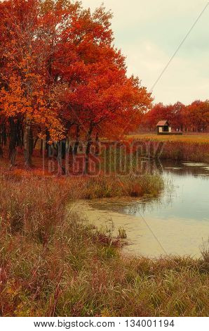 Autumn colored landscape - wooden small house near the old autumn oak forest in cloudy weather. Picturesque autumn landscape view creative filter processing