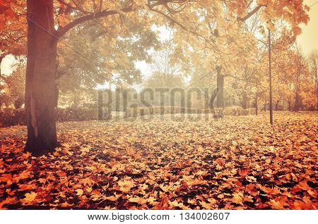 Foggy autumn landscape - autumn bare trees with autumn fallen leaves in the park in dense fog colorful landscape autumn view vintage filter applied